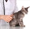 Ветеринарные клиники в Туре